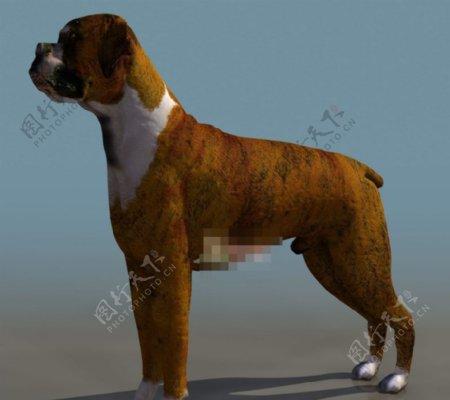 狗3d模型