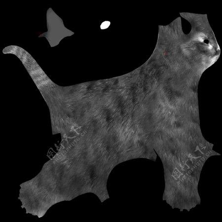 猫猫咪动物图片
