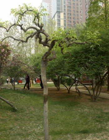 春天的公园图片