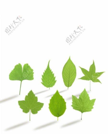 环保绿叶图片