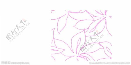 枫叶线条图片