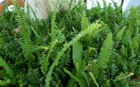 绿色植物灌木丛图片