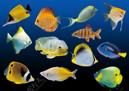 热带鱼素材图片