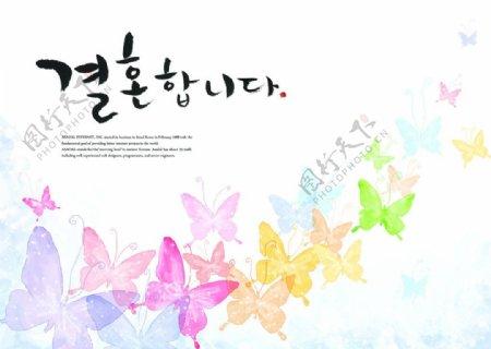 韩式蝴蝶图图片