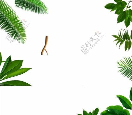淘宝页面树叶