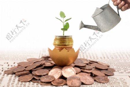投资理财给金币灌溉