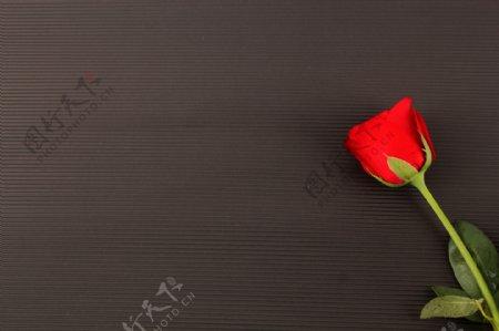 红色玫瑰七夕黑色背景摆拍