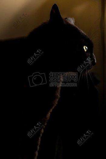 晚上动物宠物眼睛毛皮黑色小猫猫发光黑豹