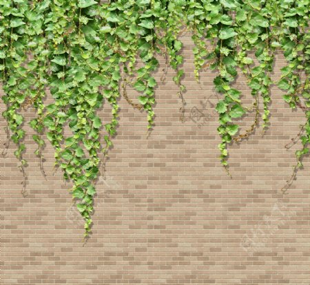 藤蔓背景墙