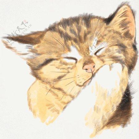 猫家禽家畜动物插图24
