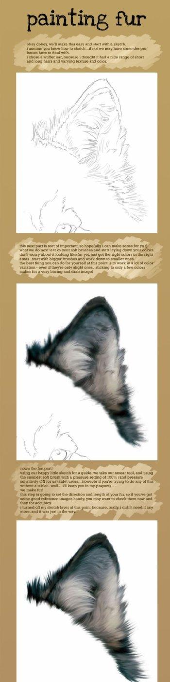 毛皮绘画教程
