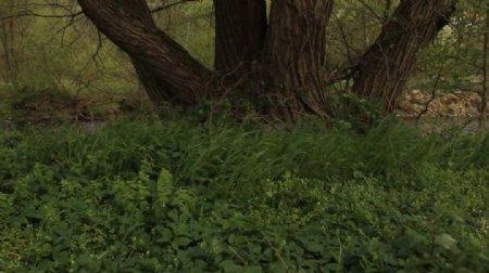 微风下的绿草大树视频