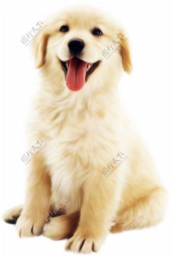 一只毛茸茸的狗狗