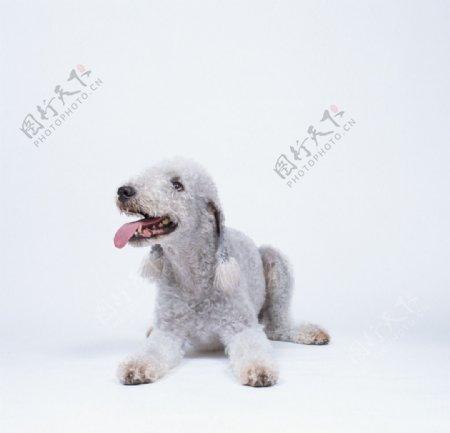 狗犬类家禽家畜哺乳动物