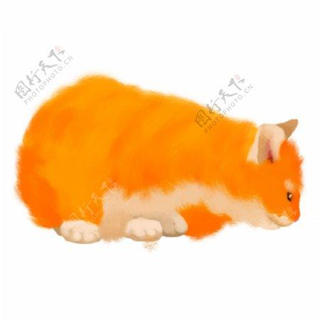 可爱的毛茸茸宠物橘猫手绘素材