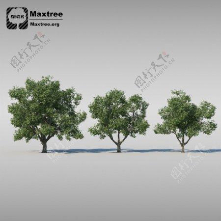 茂盛杨树3d渲染模型