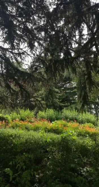 透过绿荫看到石楠红叶