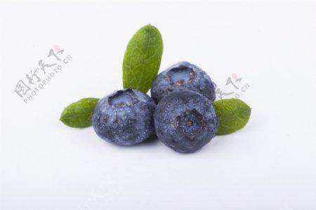 新鲜蓝莓实物图摄影图3