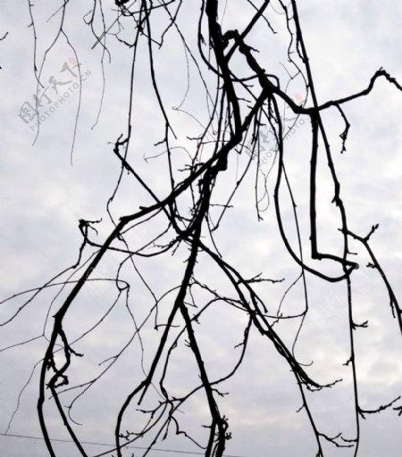 树枝枝桠树丫线条藤蔓