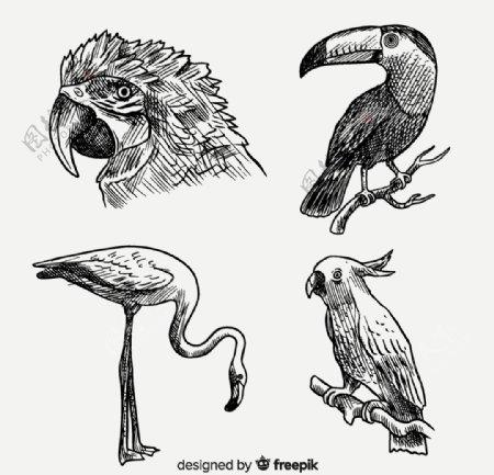 4款逼真手绘鸟类