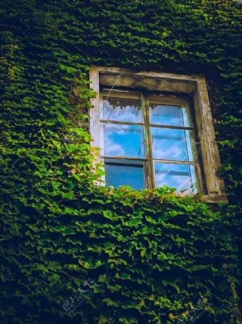 爬满了藤蔓墙上的窗户