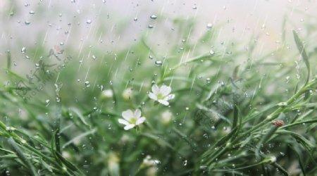 雨天图片素材