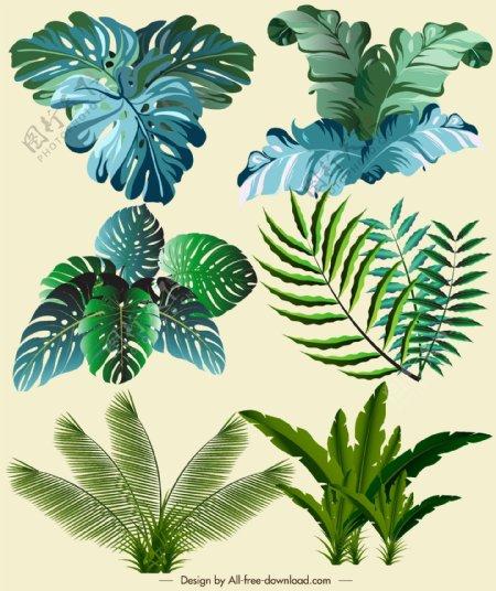 绿色热带植物
