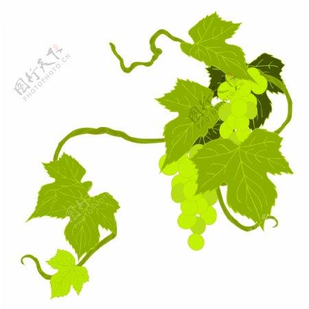 葡萄树藤蔓