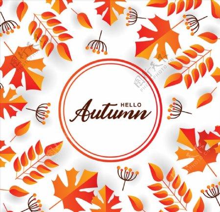 秋天枫叶背景