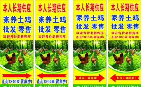 土鸡养殖批发零售