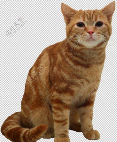 可爱动物猫咪