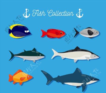 创意海洋鱼类图片
