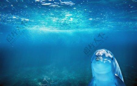 海豚水族馆观赏游玩背景素材图片