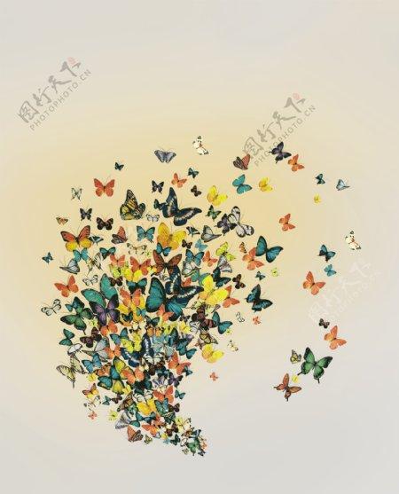 蝴蝶印花图片