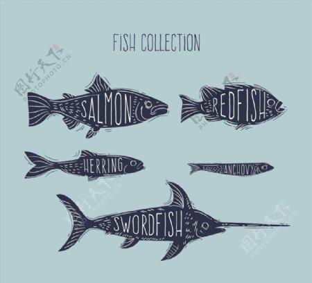 手绘带名字的鱼类图片