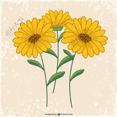 美丽黄色雏菊图片