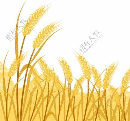 麦穗底图素材图片