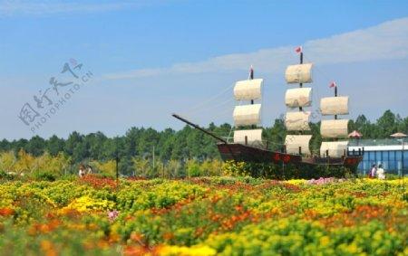 菊花丛中的帆船图片
