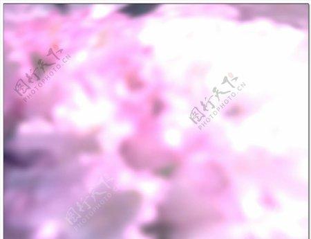 浪漫樱花背景视频