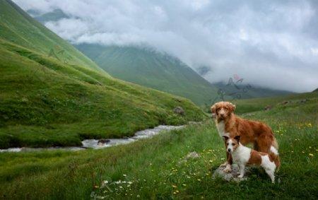 两条可爱的狗狗图片