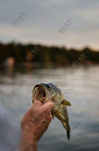 微距下的鱼嘴图片