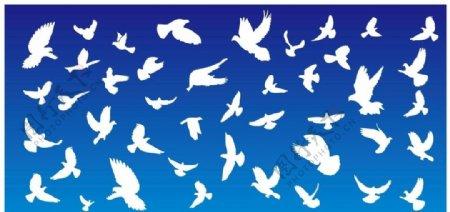 鸽子矢量图片