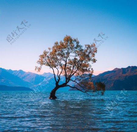 水中的大树图片