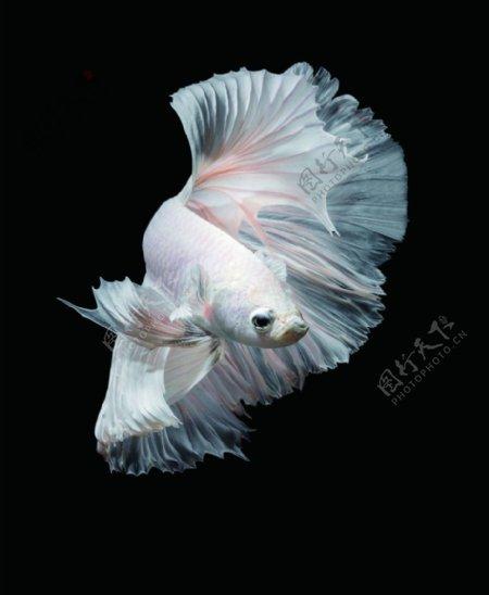 珊瑚鱼观赏鱼图片