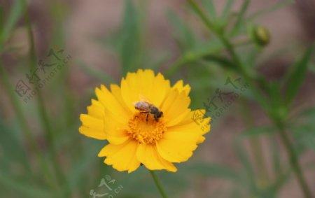 花朵与蜜蜂图片