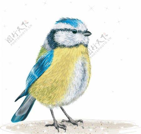 肥肥的小鸟图片