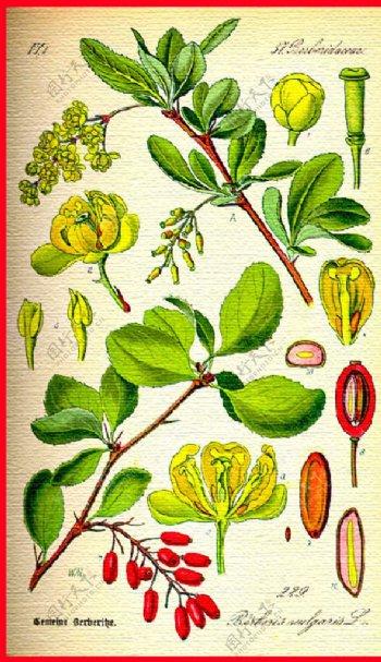 花草植物水彩图片