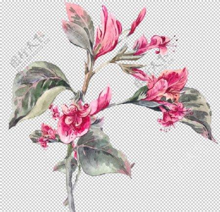 水彩花卉高清素材图片