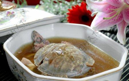 乌龟汤图片