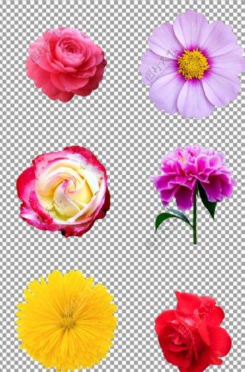 可爱的花朵图片
